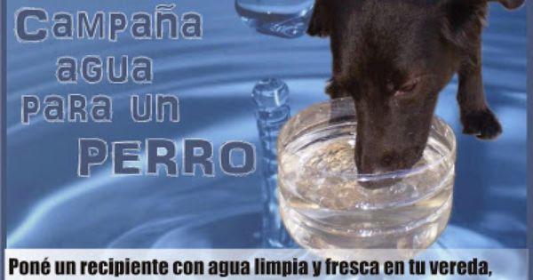 Soberania Ecologica Campana Agua Para Un Perro Perros Animales Agua