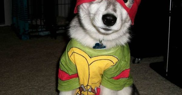 disappointed husky - photo #47