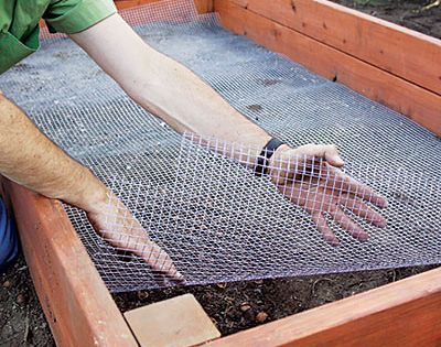 How to Build the Perfect Raised Bed Garden | Raised Bed Vegetable