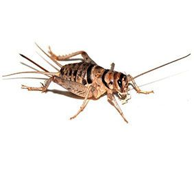Other Desert Pests Anderson Pest Control Las Vegas Pest Control Pest Control In Las Vegas Nv And He Pest Control Pest Control Plants Natural Pest Control