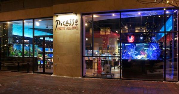 Picasso Fish Store Fun To Look At Pet Store Design Aquarium Store Kansas City Activities