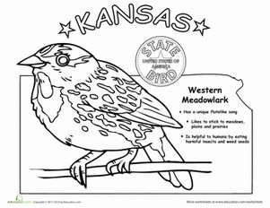 Kansas State Bird Kansas State Bird State Of Kansas State Birds