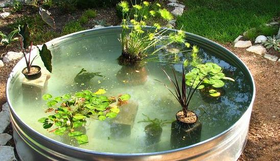 Made fish pond filter how to make a container pond in a for Koi pond next to pool