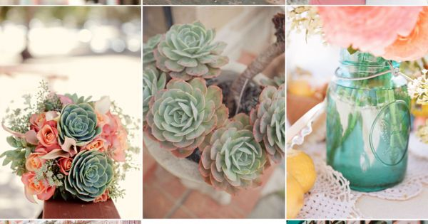 Beautiful color palette around succulents and peachy-pink flowers.