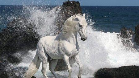 Pin By Merikae Leavitt On White Light Horses Beautiful Arabian Horses Most Beautiful Horses Horses