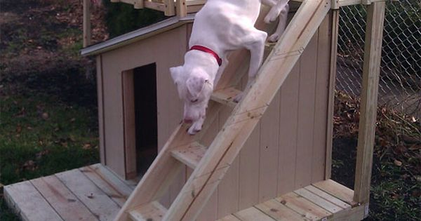 Dog house project http://gardenclub.homedepot.com/build-a-luxury-doghouse/