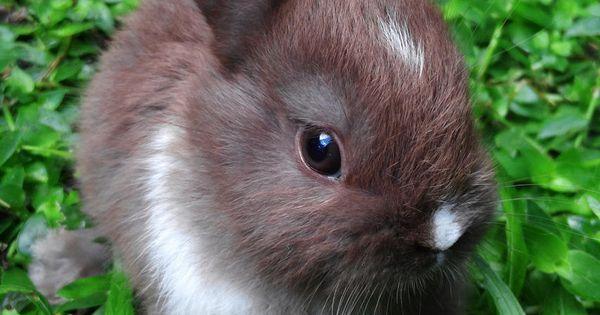 baby rabbits - Google Search | Bunny-Rabbits! | Pinterest ...