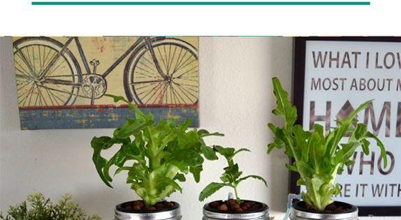 Nice 3 Mason Jar Aquaponics Kit Organic Sustainable