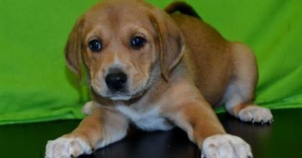 Aberdeen From The Greenville Humane Society In Greenville Sc Dogs Friends Forever Your Best Friend