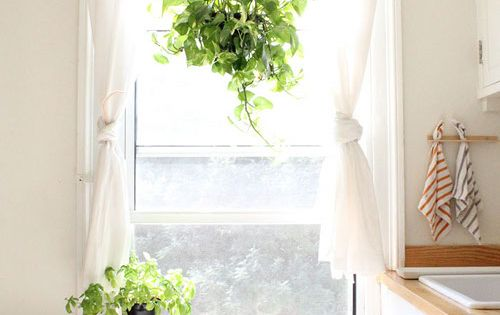 The Dishtowels! The Plant Hanging From The Curtain Rod
