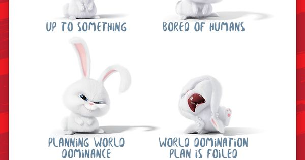Bunny Language as told by Snowball The Secret Life of