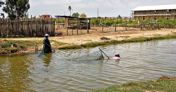 Two women using a seine net to catch fish berbice for Seine net fishing