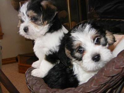 Top 20 Beagle Hybrids Beagle Mix Puppies Beagle Mix Beagle Dog