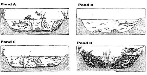 Ecological Succession Worksheet 7th Impacting Earth