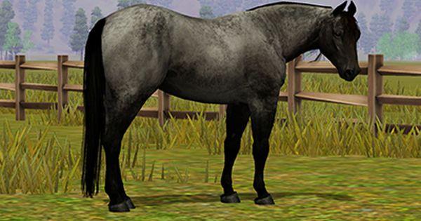 Horse face markings daruma fields saddlery shop