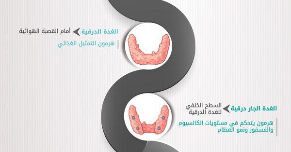 انفوجرافيك ما لا تعرفه عن الغدد في جسم الأنسان Glands Health