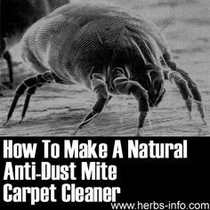 How To Make A Natural Anti Dust Mite Carpet Cleaner Dust Mites Carpet Cleaners Cleaning Hacks