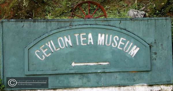 Green Tea Brands In The Philippines