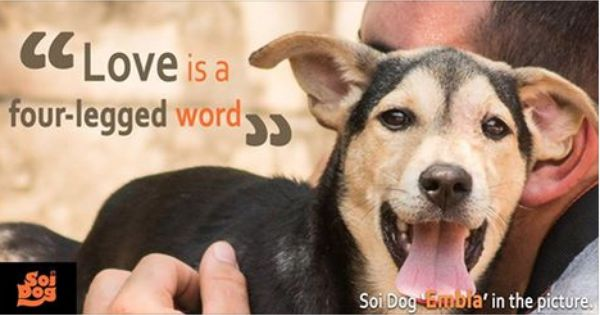 Image result for soi love is a four legged word