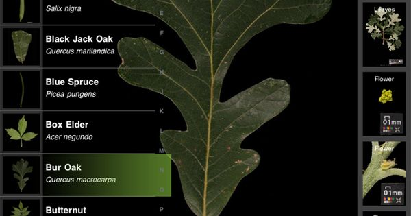 Leafsnap App for iPhone & Android that allows you to