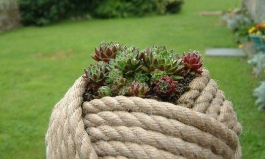 Awesome ~ Giant monkey fist knot planter with succulents