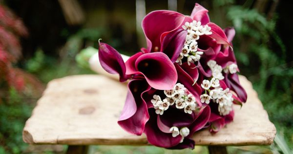 Did you know that a calla lily is not actually a lily? Yup, although these sleek and sophisticated flowers are just as much a show-stopper as their namesake, th