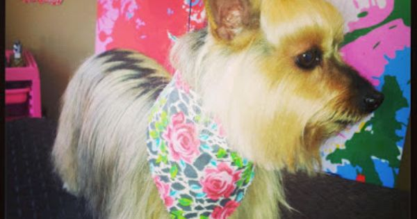 Shelby S Pet Styles Shelby S Pet Style Gallery Pet Style Peace Love Dogs Pets