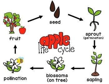 Integrated Life Cycle Chart