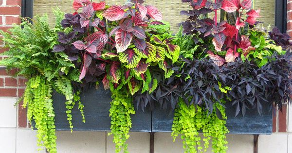 planting design for planter box | Container gardening ideas protecting window flower