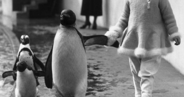 Little girl walks with a Penguin, London Zoo, 1937. via Photography Penguin