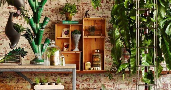 Plantas de interior para lugares con poca luz low light - Luces para plantas de interior ...