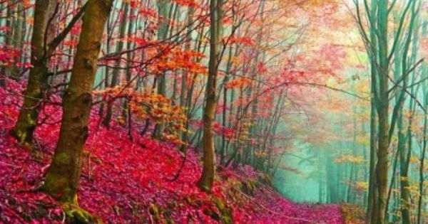 Red Forest Path -- Italy This is so beautiful! Would love to