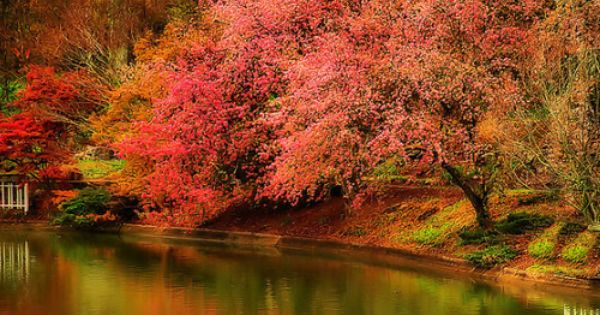 Gorgeous fall colors...