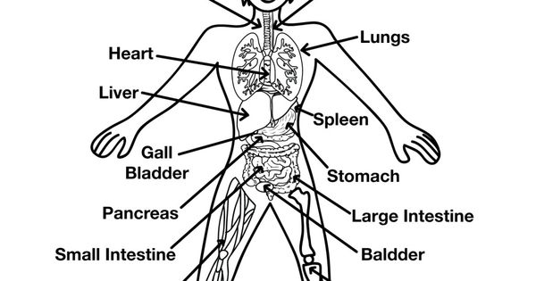 muscular  skeletal systems