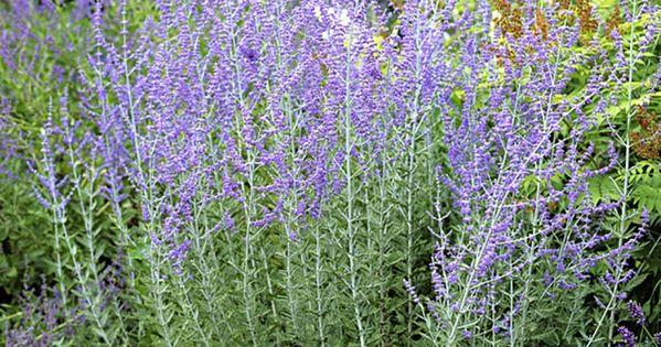 10 plantes faciles qui r sistent au manque d eau planters s rum et plantes - Plantes d int u00e9rieur faciles d entretien ...