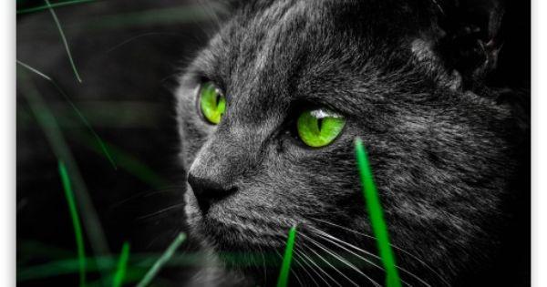 Cat Hd Desktop Wallpaper Widescreen High Definition Fullscreen Mobile Dual Monitor Cat Wallpaper Cat Greens Cats
