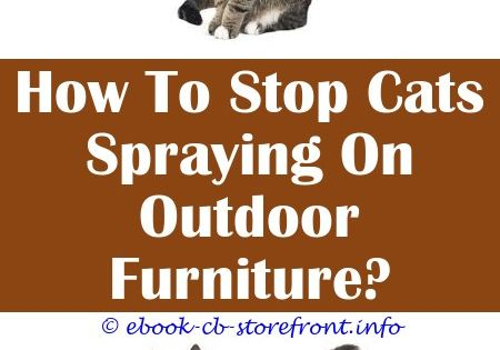 3 Fine Cool Tips Healing Spray For Cats Feliway Spray For Cats Pets At Home Homemade Spray Deterrent For Cats Air Spray Deterrent For Cats Cat Keeps Spraying E