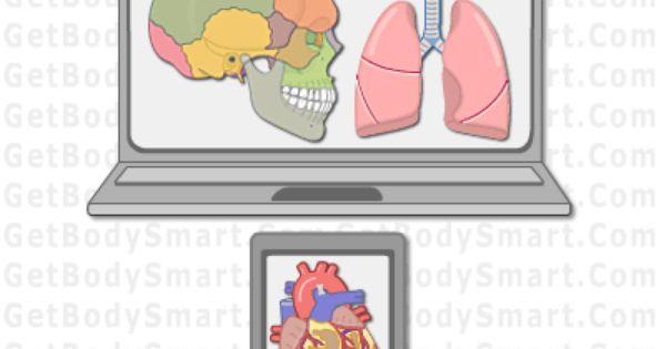 Human Anatomy And Physiology Web Apps Getbodysmart Com Human