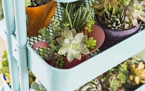 7 ikea hacks for gorgeous succulent gardens gardens amor and therapy. Black Bedroom Furniture Sets. Home Design Ideas