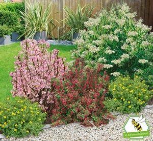 Mein Schoner Garten Bienenfreundliche Hecke Im Set 5 Pflanzen Pflanzen Vorgarten Pflanzen Garten Pflanzen