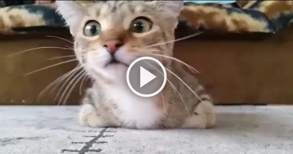 Kitty Reacts When Watching A Horror Movie Scary Cat Cat Watch Cats