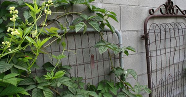 Old gates used for garden trellis. Love Love
