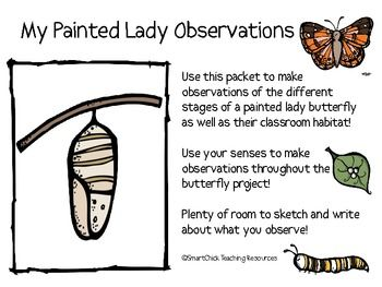 My Painted Lady Butterfly Observation Journal Butterfly Life