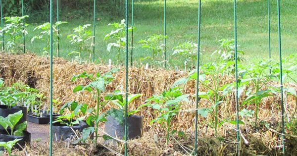 34e3e0ddb848b8e310a94eb162f6afb3 - Hay Bale Gardening Effortless Food Production