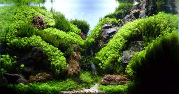 Great Mountain Valley Type Aquascape Freshwater Aquaria Pinterest Aquariums Aquascaping