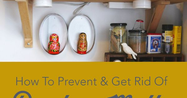 How To Prevent Get Rid Of Pantry Moths Pantry Moths And Pantry