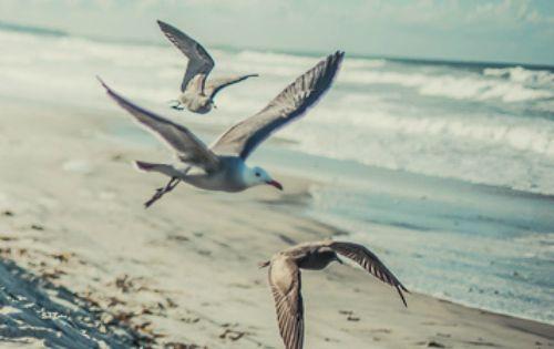 Seagulls flying low, beachside. http://wetravelandblog.com travel photography freedom