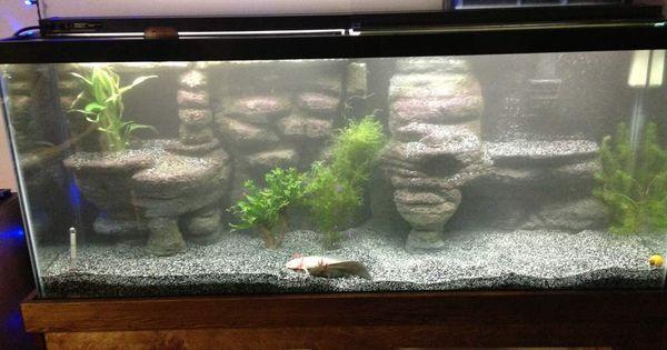 click the image to open in full size axolotls pinterest aquarium terrarium und aquarium. Black Bedroom Furniture Sets. Home Design Ideas