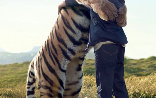 Calvin and Hobbes in real life... I want tiger hugs!