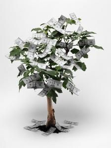 how to make a money tree for a party